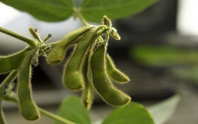 American Soybean Association, Evaluation of USDA Food for Progress Program in Afghanistan